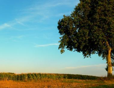 Paysage arbre